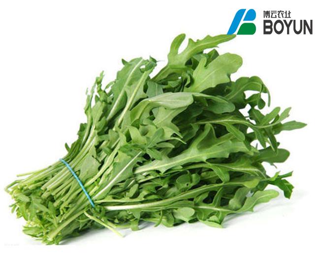 温室绿叶蔬菜项目