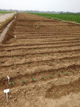 博云农业助力山东省农科院玉米及其品种研发