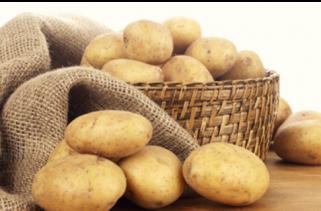 马铃薯作物种植方案