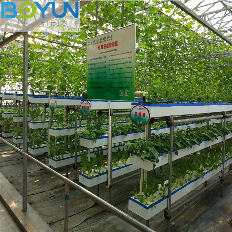 福建无土栽培工程之低段密植栽培 博云农业规划设计现代农业