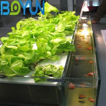 北京鱼菜共生水培叶菜生态健康无土栽培工程