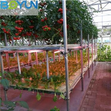 博云农业设计施工河北无土栽培工程之感应式苗床栽培科技农业